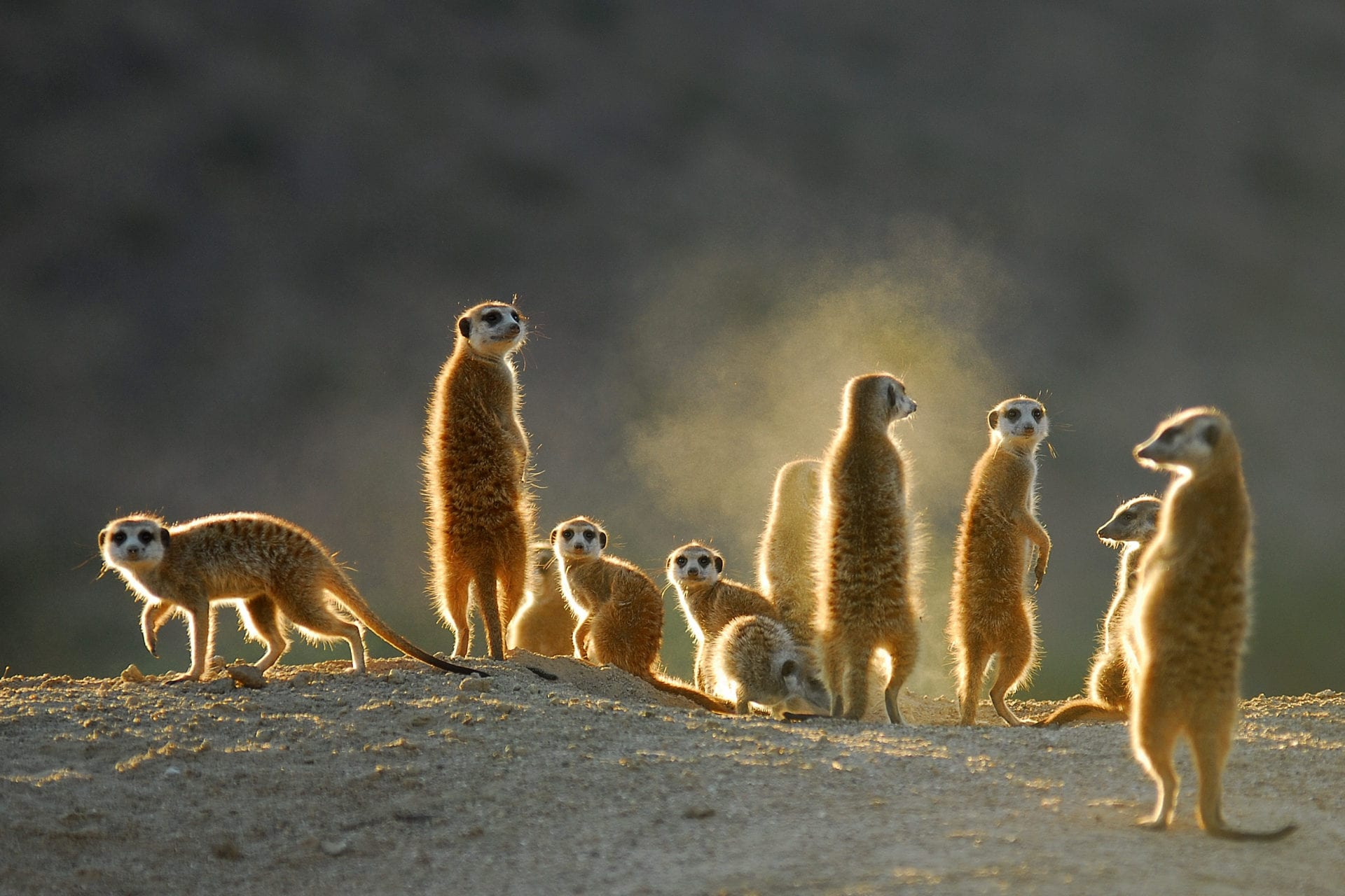 Effects of Light Pollution on Foraging Behaviour of Rodents