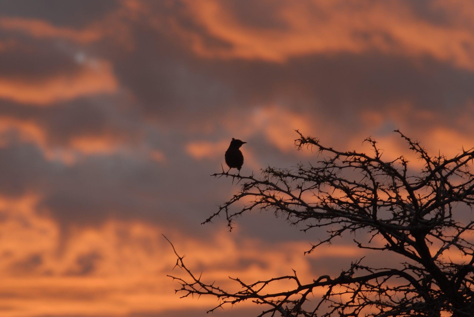 birds, birder, bird watching