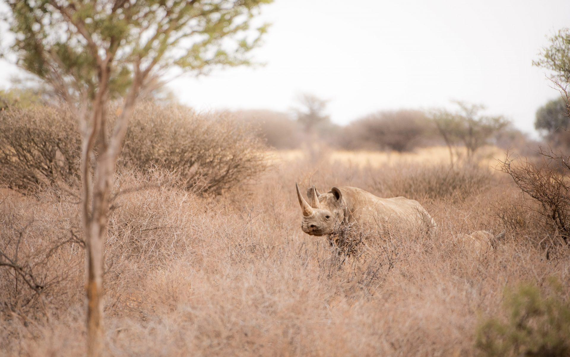 Rhino - wildlife journal winter safari