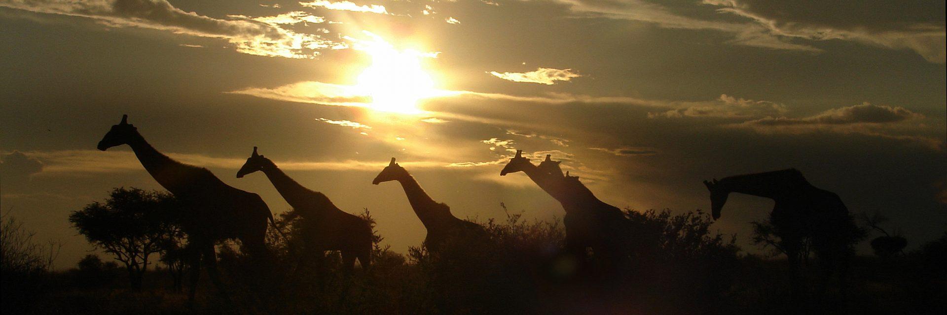 Wildlife sustainability